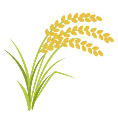 生麦生米生卵